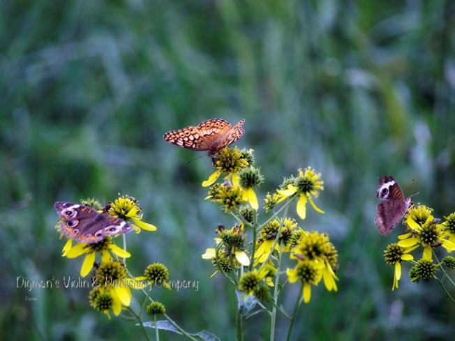 butterflieseeesmall